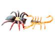 Постер, плакат: Scorpion fights spider