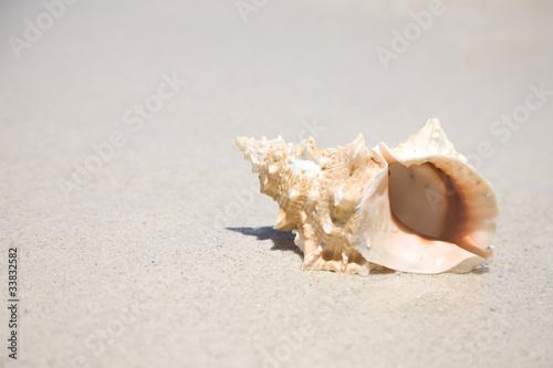 波打ち際にある巻貝