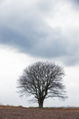 A photo of a lonely tree