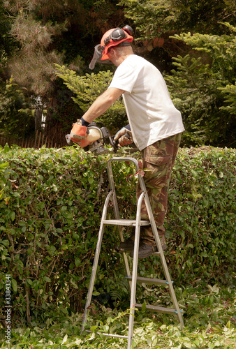Man on ladder cutting hedge