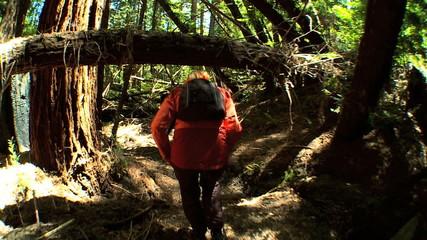 Girl Trekking Through Forest Wilderness