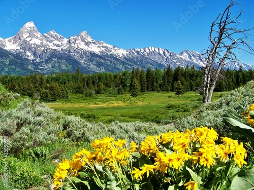 Grand Teton National Park with yellow flowers