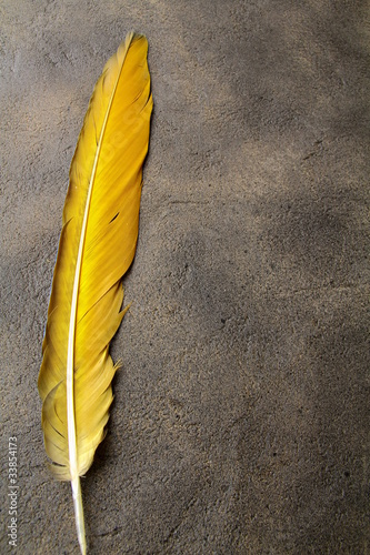 feather on a background of the empty space for the text