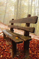 isolated bench in the park