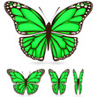 set of green butterfly isolated on white background