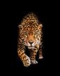 Leinwanddruck Bild Jaguar in darkness - front view, isolated