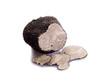 slice black truffle on white background