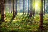 Fototapety Forest Sunset