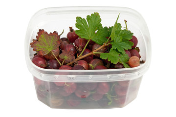 wet tasty gooseberry in the plastic semi transparent container w