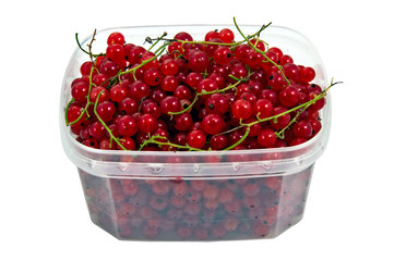 full of vitamins wet tasty red currant in the plastic semi trans