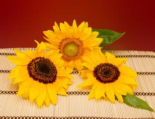 fiori di girasole