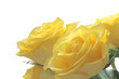 Bright cheerful yellow roses