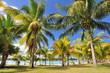 Cocotiers en bord de plage.