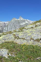 landscape of italian alpine mountain in summer
