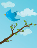 blue bird flying and twitting