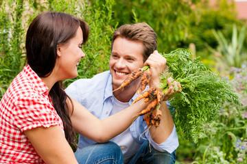 Gardening in summer - couple harvesting carrots