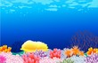 beautiful corals background