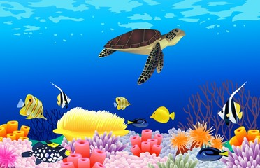 Beautiful sealife background