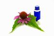 Echinacea purpurea und Blauglasflasche