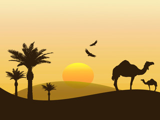 Camels in the desert of Africa