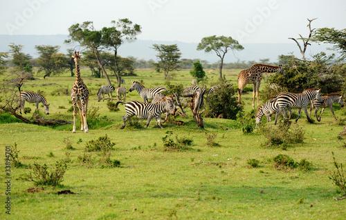Papiers peints Afrique du Sud savannah