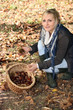 woman picking chestnuts in woods
