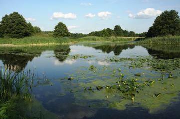 Wielkopolskie jezioro