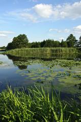 Letni krajobraz nad jeziorem
