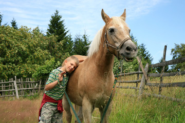 Child and horse haflinger
