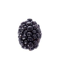 Single blackberry isolated on a white background