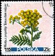 POLAND - CIRCA 1967 Tansy