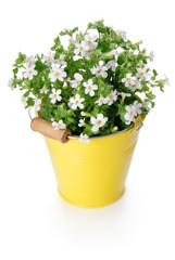 White flowers in yellow bucket