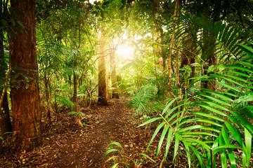 in australian rainforest