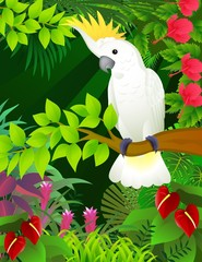 Cockatoo in the tropical forest