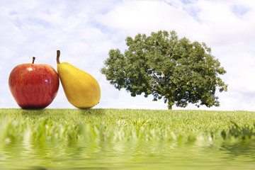 fruta y árbol