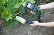 measuring radiation levels of zucchini
