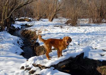 Dog on snowy bridge