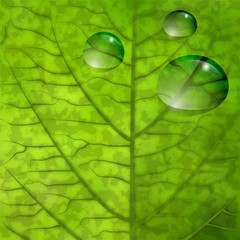 Foglia con gocce d'acqua - Leaf closeup  with water drops