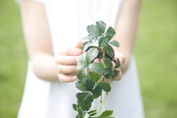 植物を持った女の子の手元