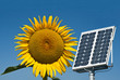 Sunflower and panel solar, the future energy