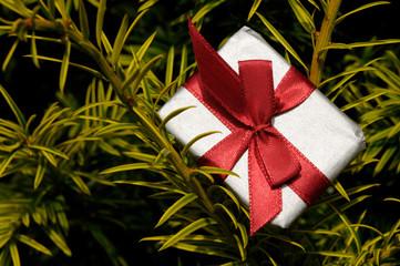 Geschenk im Busch