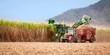 Leinwanddruck Bild - Sugar cane harvest