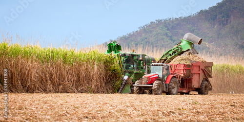 Leinwanddruck Bild Sugar cane harvest