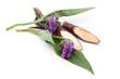 Beinwell (Symphytum officinale L.) Blüten und Wurzel
