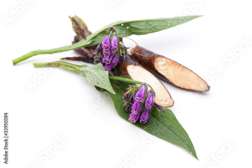 Beinwell (Symphytum officinale L.) Blüten und Wurzel - 33950384