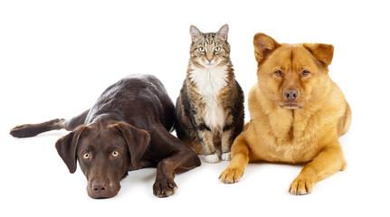 Three pets together