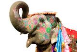 Fototapety hand painted elephant profile, Jaipur, Rajasthan,India