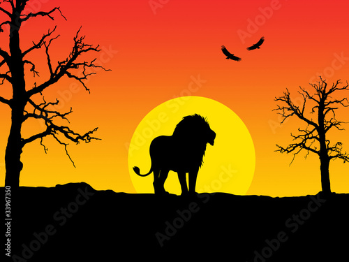 Beautiful silhouette of a lion