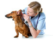 veterinarian doctor making check-up of a dog
