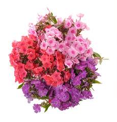 Bouquet of phloxes
